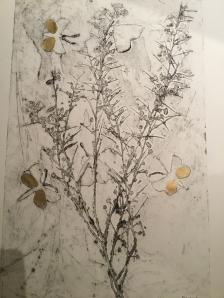Prickly Acacia with Golden Sun Moths
