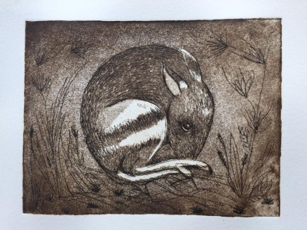 """Eastern Barred Bandicoot"" is a copperplate, hard-ground etching in sepia."